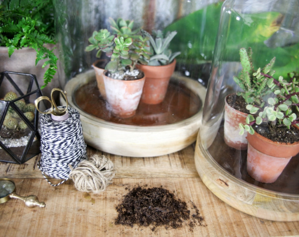 The Nkuku collection of planters and terrariums are perfect for displaying a variety of indoor plants from succulents to cacti.