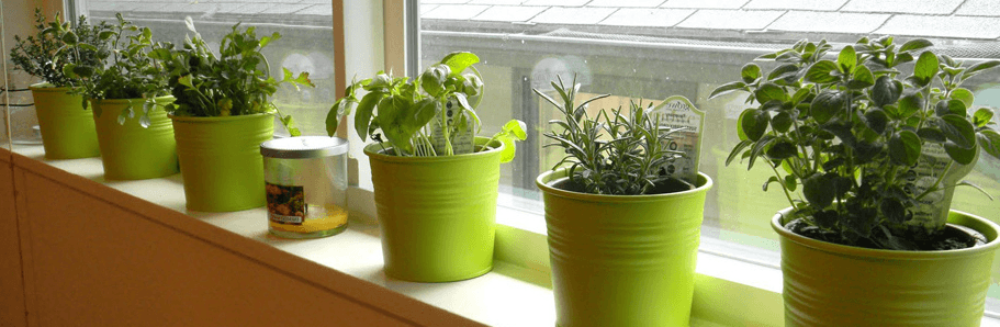 Common Herbs To Grow At Home