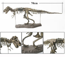 "Load image into Gallery viewer, 28"" T-Rex Skeleton Model"
