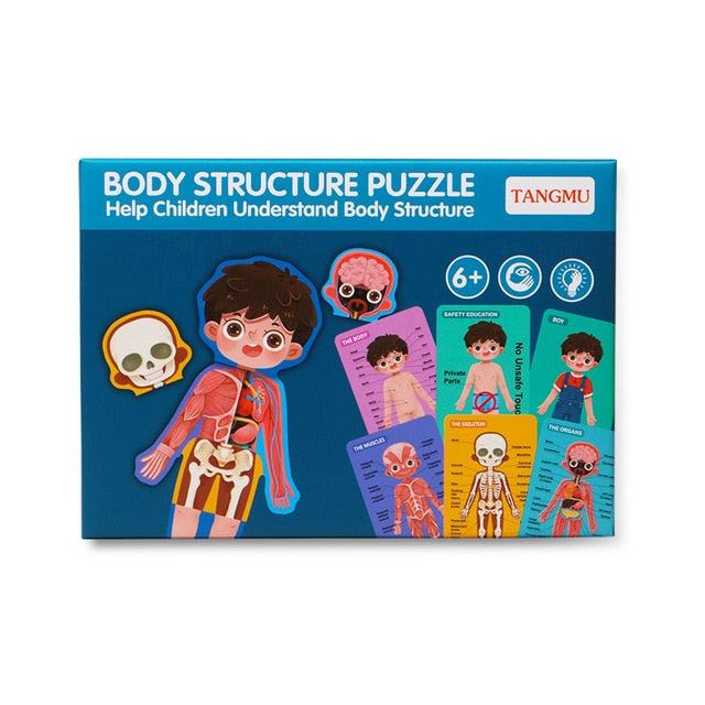 Human Body Structure Puzzle