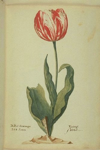 Tulip of the Week: Admiral Van Der Eijck
