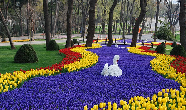 Are Tulips Celebrated Beyond The Netherlands?