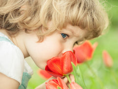 Little Girl Tulips Smelling Tulips Red Tulips Dutch