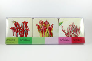 Amsterdam Tulip Museum Jacob Marrel Tulip Coaster Sleeve