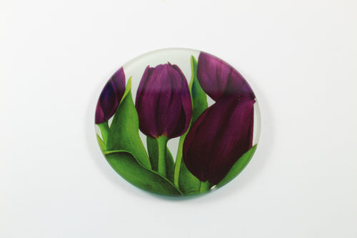 Amsterdam Tulip Museum Queen Of Night Tulip Jaci Hogan Glass Coaster