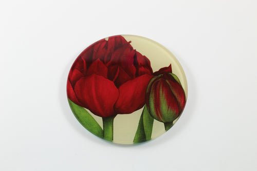 Amsterdam Tulip Museum Red Uncle Tom Tulip Jaci Hogan Glass Coaster