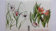 Tulip Book of Postcards by Anita Walsmit Sachs