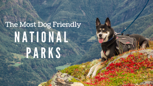 The Most Dog Friendly National Parks in The U.S.