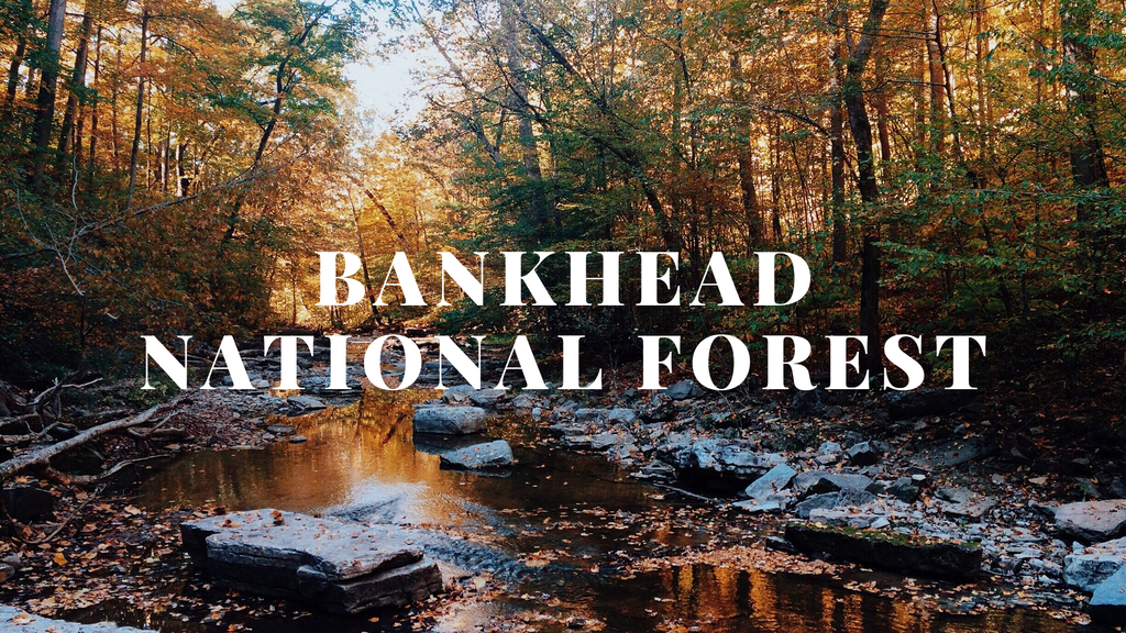 Weekend Getaway: Bankhead National Forest