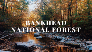 Camping Cot Weekend Getaway: Bankhead National Forest