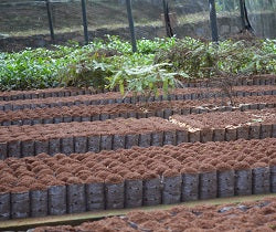 Walters Bay Tea Nursery Soil 1