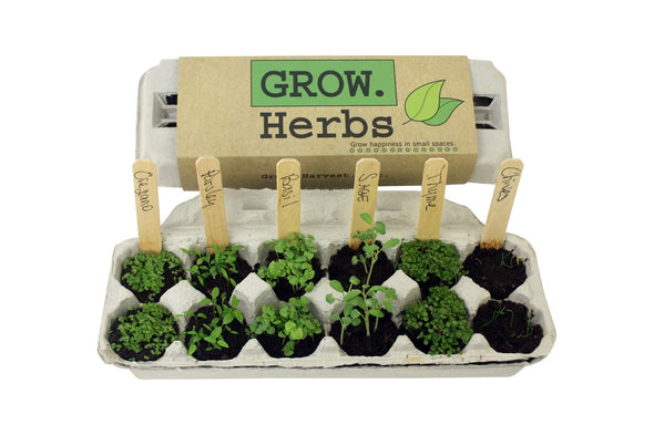 Garden Kit  Grow Herbs