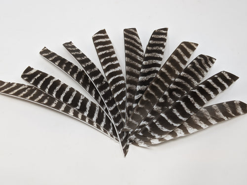 Full Length Natural Barred Turkey Feathers
