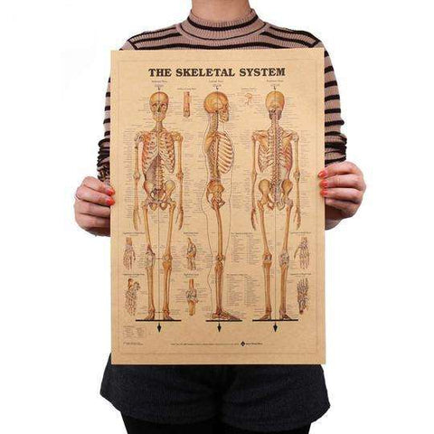 MyFancySauce:Vintage Human Body Structure Print - 42 x 29cm