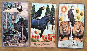 Three Card Crow Tarot Reading - Tuesday November 13th