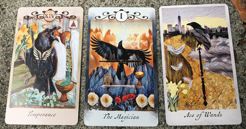 Crow Tarot Reading