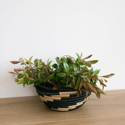 Twist Woven Pot Black and Tea with Plant