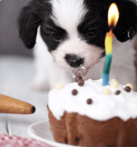 Dog eating a sweet cake