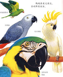 First Discovery Animals Series: Parrots