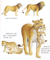 First Discovery Animals Series: Lions