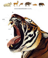 First Discovery Animals Series: Tigers