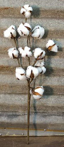 Cotton Stem, 20