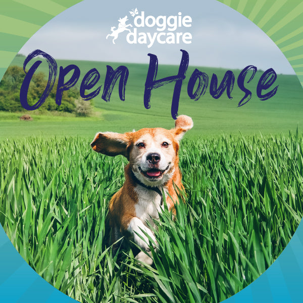 Doggie Daycare Open House
