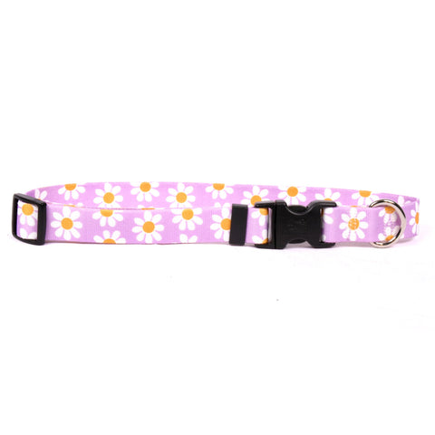 Yellow Dog - Lavender Daisy Collar