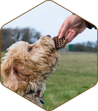 Yummy Combs® Flossing Treat for Dogs