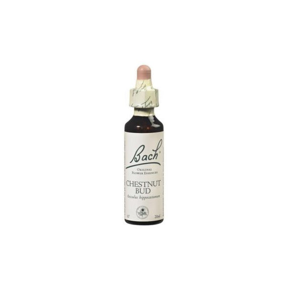 Floral de Bach Chestnut Bud 20ml - Nelsons and Co