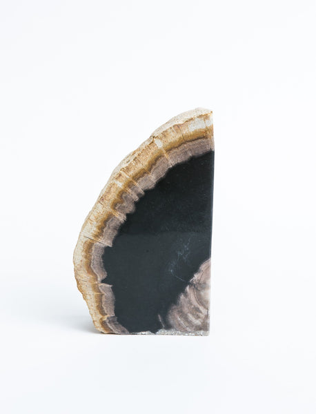Petrified Wood Bookend - Individual