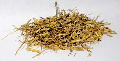 1 Lb Witches Grass Cut (agropryon Repens)
