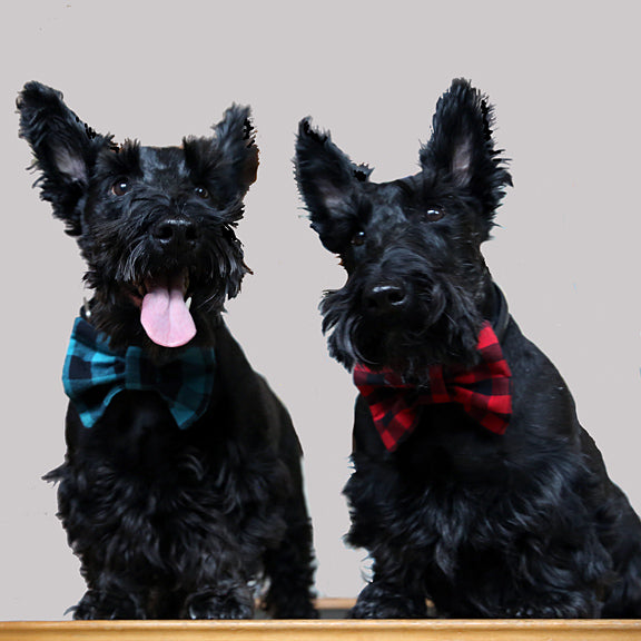 Dram and Thistles - Stylish Scotties!