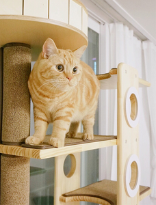 How to make your cats love their New Cat Condo/Cat House