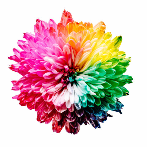 Rainbow colored flower to represent chakras