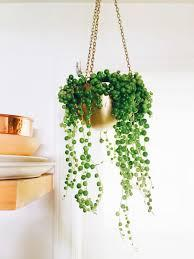 "TMC 8"" String of Pearls Large - $26"