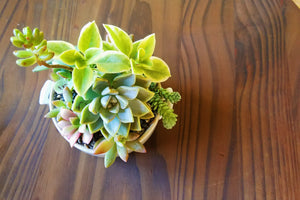 Call Me, Maybe - Small Succulent Arrangement