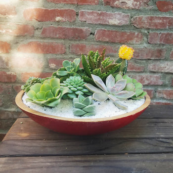 You Complete Me - Large Succulent Arrangement