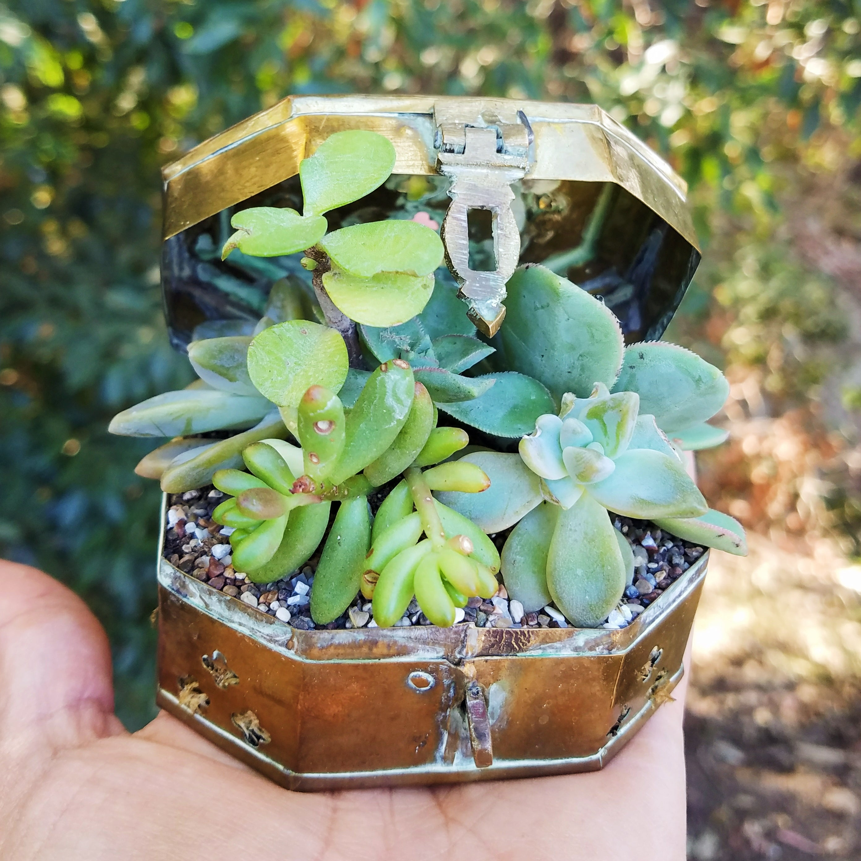 We're Just Friends - Mini Succulent Arrangement