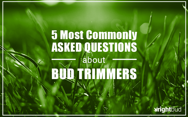 5 Most Commonly Asked Questions About Bud Trimmers