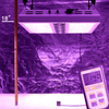 Image of Viparspectra PAR1200 Dimmable LED Grow Light - Right Bud