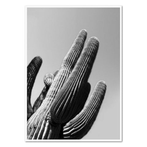 Glossy Framed Art - Desert Cactus - The Furniture Store & The Bed Shop