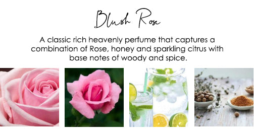 floral-fragrance-rose