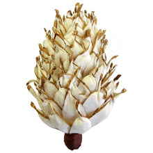 Balsa Wood Arizona Pine-Flowers-Angel Aromatics