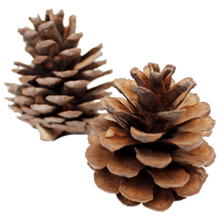 Pine Cones 200g-Angel Aromatics