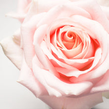 Rose 15ml Oil-Oil Diffuser-Angel Aromatics