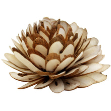 Small Protea-Flowers-Angel Aromatics