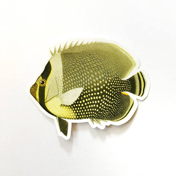 Butterflyfish Sticker