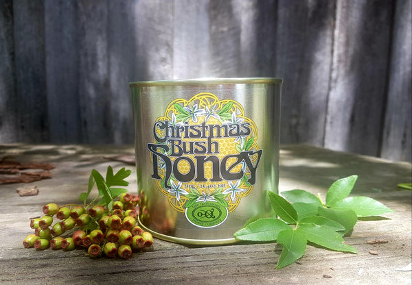 Tasmanian Honey Christmas Bush