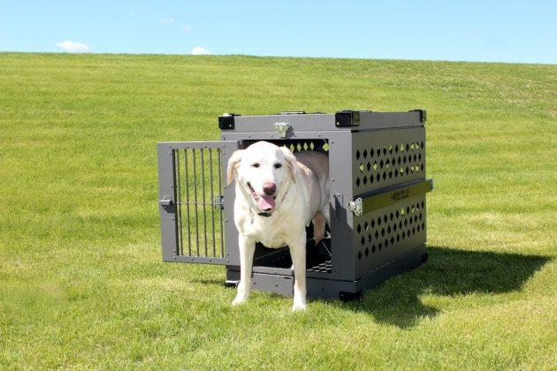 The Do's and Don'ts of Crate Training